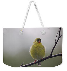 Weekender Tote Bag featuring the photograph Goldfinch Puffball by Susan Capuano