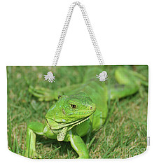 Gorgeous Green Iguana Stretched Out Weekender Tote Bag