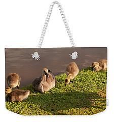 Weekender Tote Bag featuring the photograph Goslings Basking In The Sunset by Chris Flees