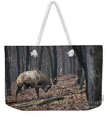 Weekender Tote Bag featuring the photograph Got A Scratch by Andrea Silies