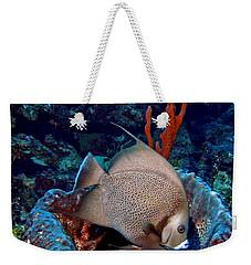 Gray Angel Fish And Sponge Weekender Tote Bag