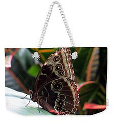 Gray Cracker Butterfly Weekender Tote Bag