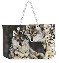 Gray Wolf Canis Lupus Pair In The Snow Weekender Tote Bag