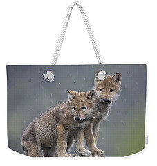 Gray Wolf Canis Lupus Pups In Light Weekender Tote Bag