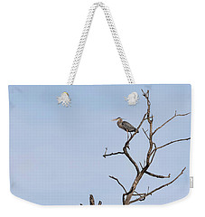Great Blue Heron Presentation 2017-1  Weekender Tote Bag by Thomas Young