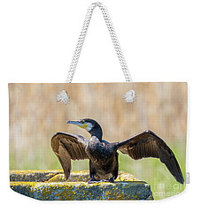 Weekender Tote Bag featuring the photograph Great Cormorant - Phalacrocorax Carbo by Jivko Nakev