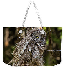 Great Grey Owl In Windy Spring Weekender Tote Bag by Yeates Photography
