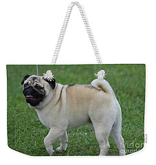 Great Looking Pug Dog On A Leash Weekender Tote Bag by DejaVu Designs