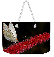 Weekender Tote Bag featuring the photograph Great Southern White by Judy Vincent