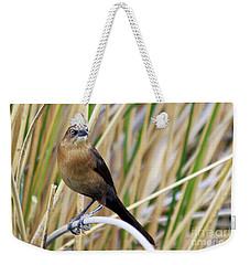 Great-tailed Grackle Weekender Tote Bag by Afrodita Ellerman