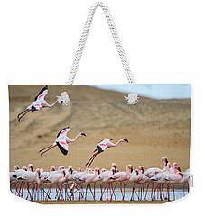 Greater Flamingos Phoenicopterus Weekender Tote Bag