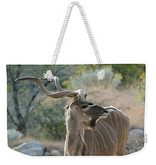 Weekender Tote Bag featuring the photograph Greater Kudu 4 by Fraida Gutovich