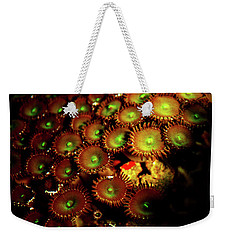 Weekender Tote Bag featuring the photograph Green Button Polyps by Anthony Jones