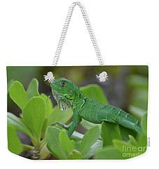 Green Common Iguana In Shrubbery Weekender Tote Bag