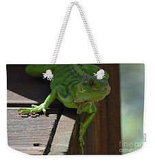 Green Common Iguana On The Edge Of A Bridge Weekender Tote Bag