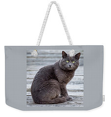 Green Eye Stare Cat Square Weekender Tote Bag by Terry DeLuco