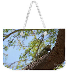 Green Iguana Climbing Up The Trunk Of A Tree Weekender Tote Bag by DejaVu Designs