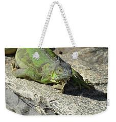 Green Iguana Resting In The Sun Weekender Tote Bag by DejaVu Designs