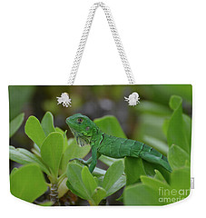 Green Iguana Walking On The Tops Of A Shrub Weekender Tote Bag by DejaVu Designs