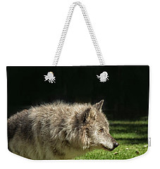 Grey Wolfe In Close Up Weekender Tote Bag by Patricia Hofmeester