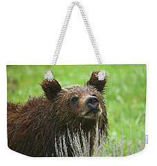 Weekender Tote Bag featuring the photograph Grizzly Cub by Steve Stuller