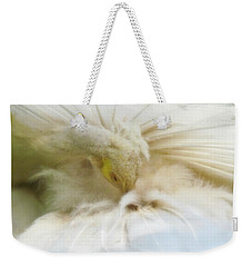 Weekender Tote Bag featuring the photograph Grooming Peacock by Katie Wing Vigil