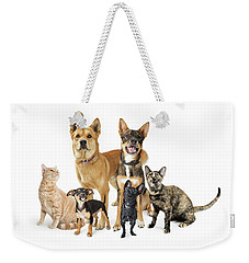 Group Of Cats And Dogs Looking Up On White Weekender Tote Bag