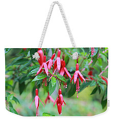 Weekender Tote Bag featuring the photograph Growing In Red And Purple by Laddie Halupa