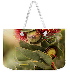 Weekender Tote Bag featuring the photograph Gum Nuts by Werner Padarin