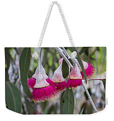 Weekender Tote Bag featuring the photograph Gumnut Flowers by Angela DeFrias
