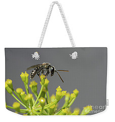 Weekender Tote Bag featuring the photograph Halictid Bee - Lasioglossum Discum by Jivko Nakev
