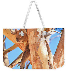 Weekender Tote Bag featuring the photograph Hanging Around, Yanchep National Park by Dave Catley