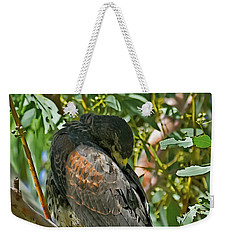 Weekender Tote Bag featuring the photograph Harris's Preening V09 by Mark Myhaver