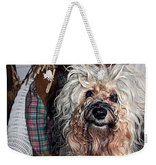Weekender Tote Bag featuring the photograph Havanese Cutie by Sally Weigand