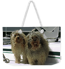 Weekender Tote Bag featuring the photograph Havanese Dogs by Sally Weigand