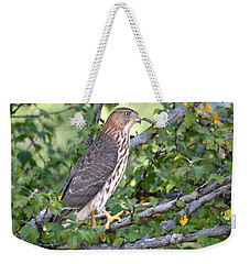 Weekender Tote Bag featuring the photograph Hawk  by AJ Schibig