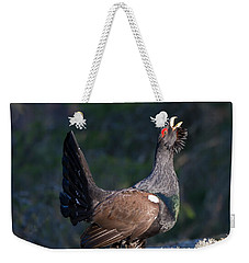 Heather Cock In The Morning Sun Weekender Tote Bag by Torbjorn Swenelius