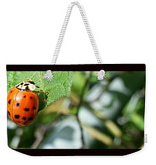 Weekender Tote Bag featuring the photograph Hello Lady by Robert Knight