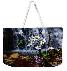 Weekender Tote Bag featuring the photograph Hepatica And Waterfall by Thomas R Fletcher