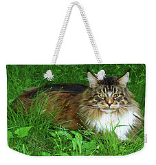 Weekender Tote Bag featuring the photograph Hercules Maine Coon Elegance by Roger Bester