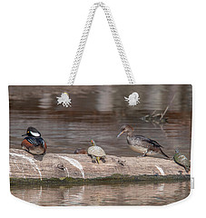 Hooded Merganser Pair Resting Dwf0175 Weekender Tote Bag