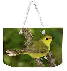 Hooded Warbler Female Weekender Tote Bag by Alan Lenk