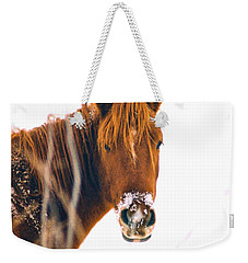 Horse In Winter Weekender Tote Bag by Steve Karol
