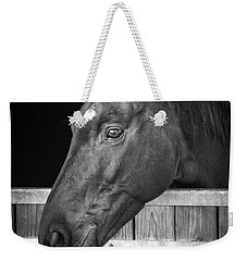 Horse Portrait Weekender Tote Bag by Delphimages Photo Creations