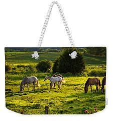 Horses Grazing In Evening Light Weekender Tote Bag