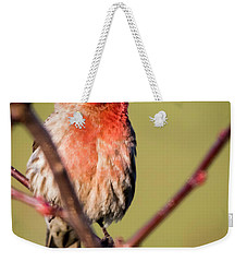 House Finch In Full Color Weekender Tote Bag by Ricky L Jones