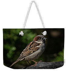 House Sparrow 2 Weekender Tote Bag