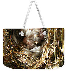 Weekender Tote Bag featuring the photograph House Wren Family by Angie Rea