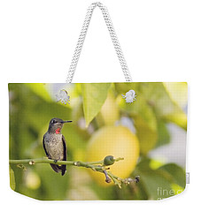 Weekender Tote Bag featuring the photograph Hummingbird In Lemon Tree by Cindy Garber Iverson