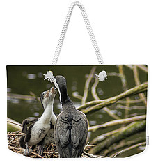 Hungry Pied Shag Chicks Weekender Tote Bag by Racheal Christian